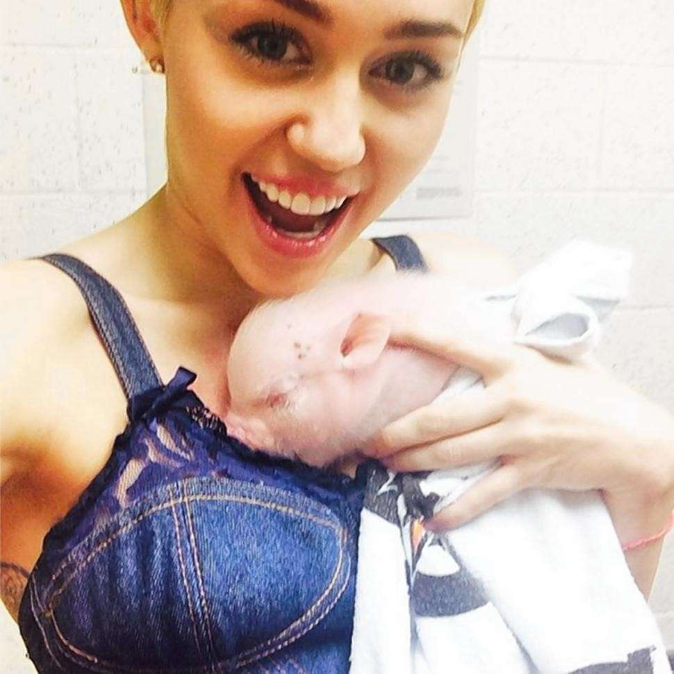 Miley Cyrus, denim e maialino