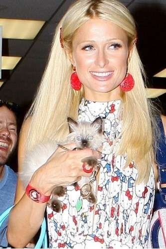 Paris Hilton e la gattina